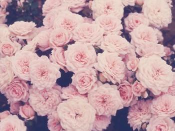 tumblr_static_flowers