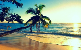 hawaii-palm-photography-Favim.com-415739